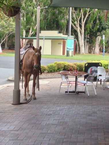 Mooloolah. Our local village community - with lots of great local businesses: Kenny's restaurant, fish n chips, Chinese takeaway, pizza take-away, Jae's Place bar & grill, butchers, bakers, newsagent, IGA Supermarket, hairdressers, pharmacy, hardware store, bottle shop, real estate, pet store, petrol station, and more! Plus, community facilities including doctor and dentist, pony club, mobile library, park and children's play area, BMX park, community swimming pool.